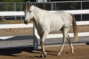He was gelded in November through a grant from One Horse At A Time and recovered perfectly.