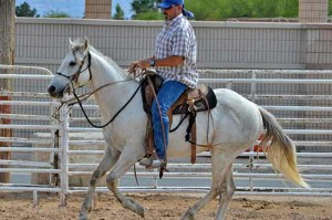 Mojave is a 7-yr old rose grey QH cross gelding.  This beautiful boy is saddle trained but is waiting for a horseman to continue his refinement.