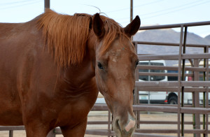 amy horse 1