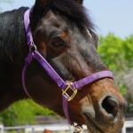 branch lean horse