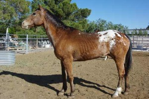 Ruby is one of two horses discovered by neighbors living in a residential backyard.
