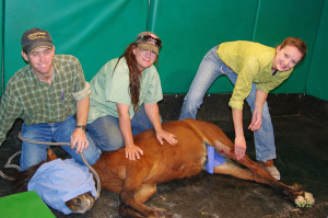 He received surgery at Desert Pines Equine to fix both issues. It was the first community-funded treatment of a L.E.A.N. horse.