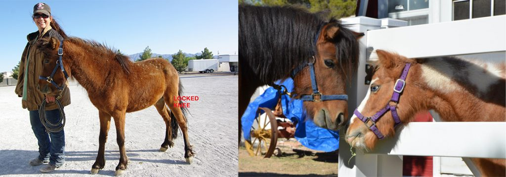 BayBe Boy before coming to L.E.A.N. and healthy after a couple months.