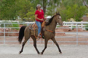 Midsummer he received a riding assessment and was found to be a wonderful, calm saddle horse.