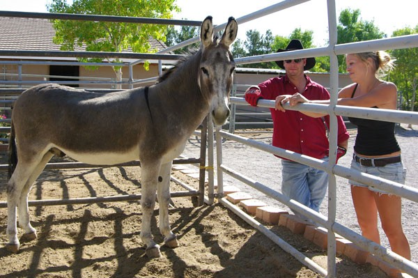 Donkey moves to another LEAN foster, Dreamwalker Ranch, for a chance to find his forever home