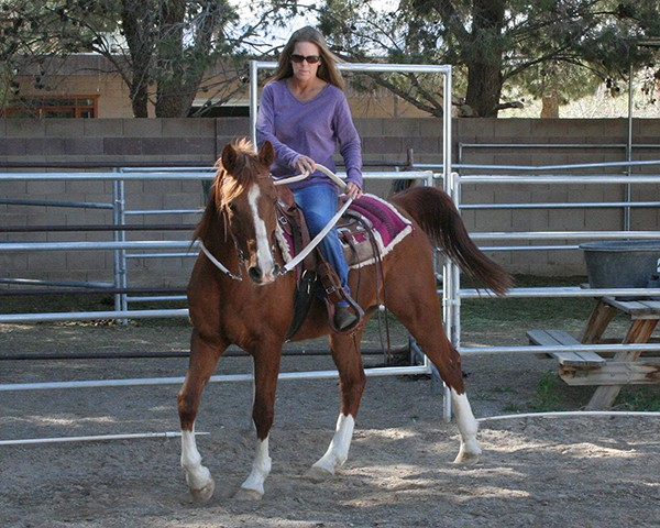 He knows the basics and is gentle under saddle; he needs an intermediate+ rider to guide him