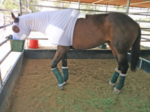 A breathable mesh hood from Sleazy Sleepwear for Horses helps keep bandaging in place and flies away