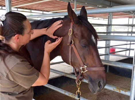 Equine Bodyworker Nichole Snashall donates her services to help Truly with weekly massage therapy