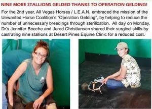 2nd Annual Geld Clinic castrates nine more stallions