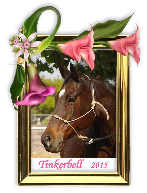 Tinkerbell memorial 600x