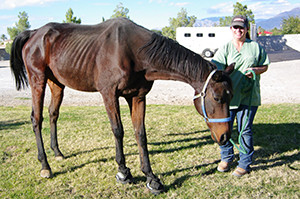 Agassi was an off-track thoroughbred seized by Animal Control for neglect