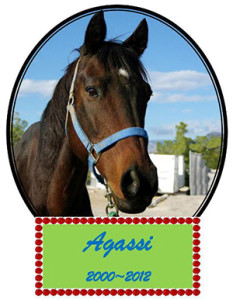 After 12 weeks, our options were over and we could no longer allow Agassi to continue suffering.  He  was a most special horse and deserved better.  Charges were filed against the owner.