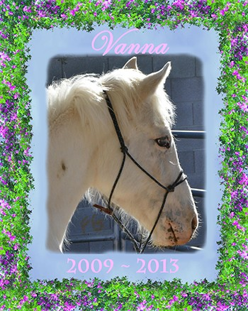 Unfortunately after 3 days in hospital Vanna lost her battle with sand colic and secondary peritonitis