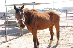 Sir John was an old gelding networked to adoption before the official formation of the L.E.A.N. program.